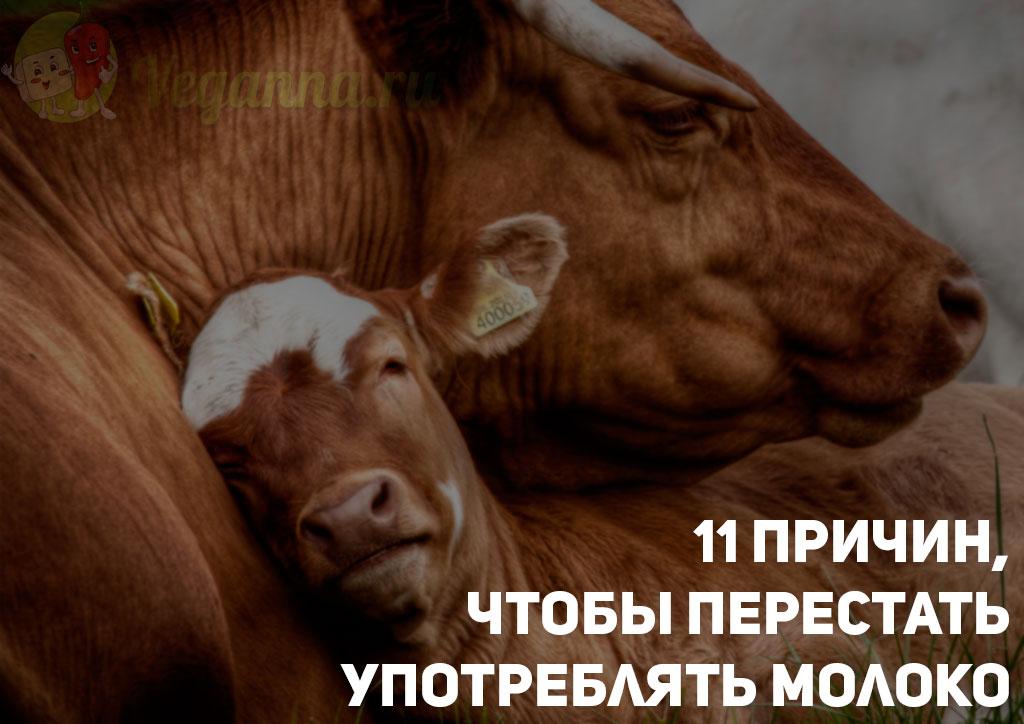 11 причин, чтобы перестать употреблять молоко