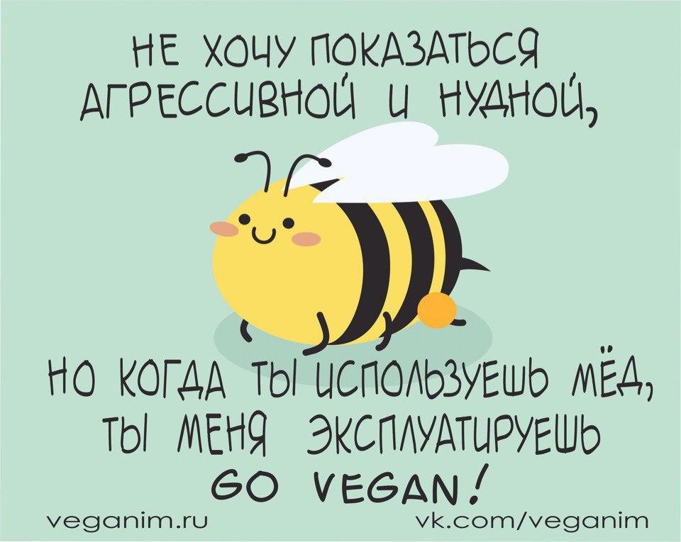 Почему мёд не веганский продукт? Почему веганы не едят мёд?